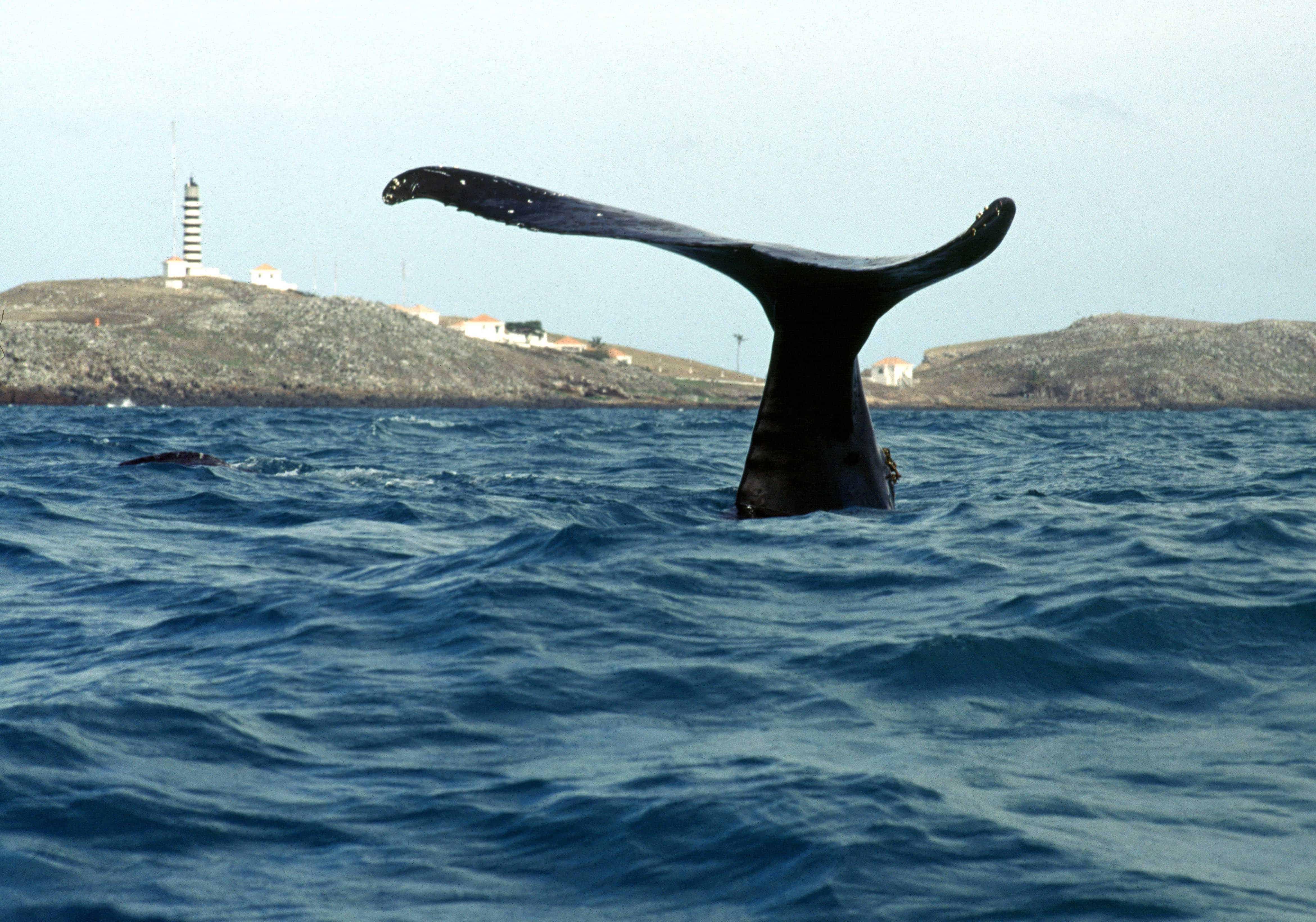 Jubarte na Costa das Baleias