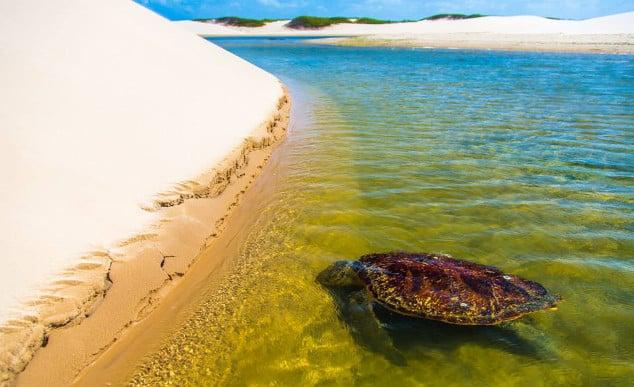Ilha do Caju, Delta do Parnaíba