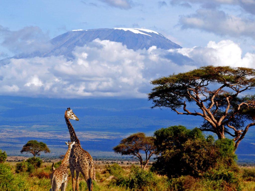 Monte Kilimanjaro ao fundo. Foto via