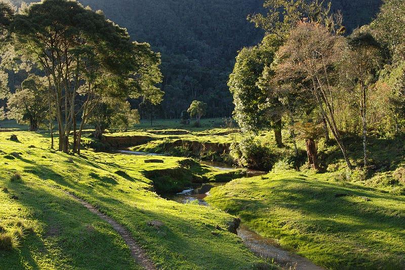Parque Municipal das Nascentes. Foto via